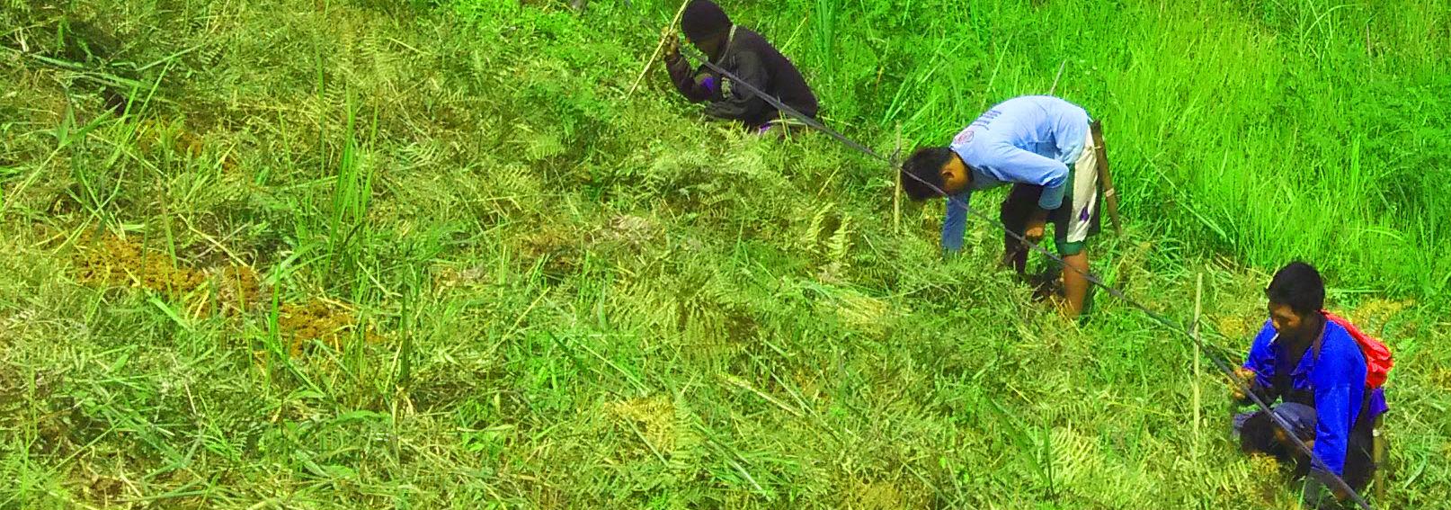 PES planting initiative