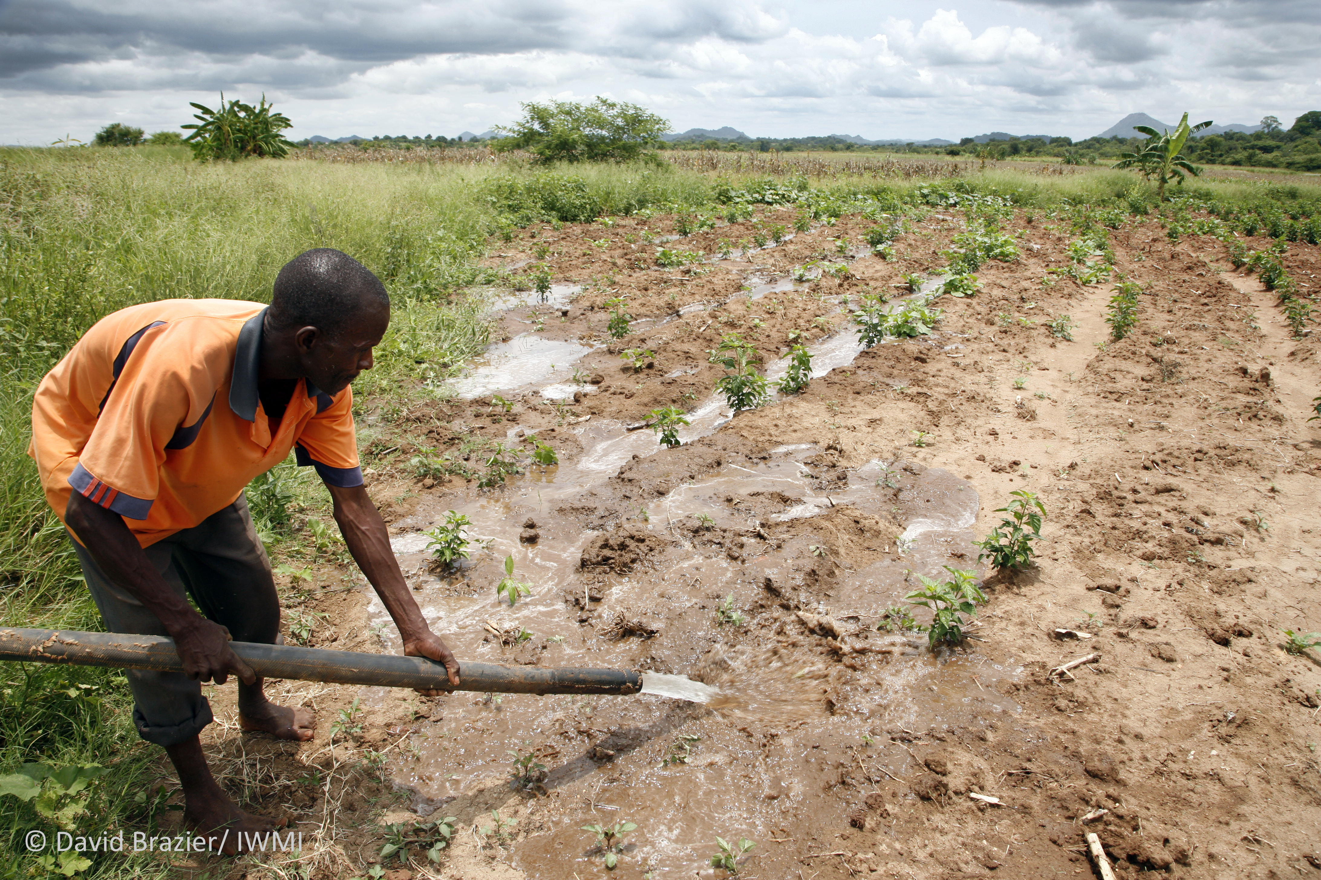 Supplying water to a chillie farm in Zimbabwe