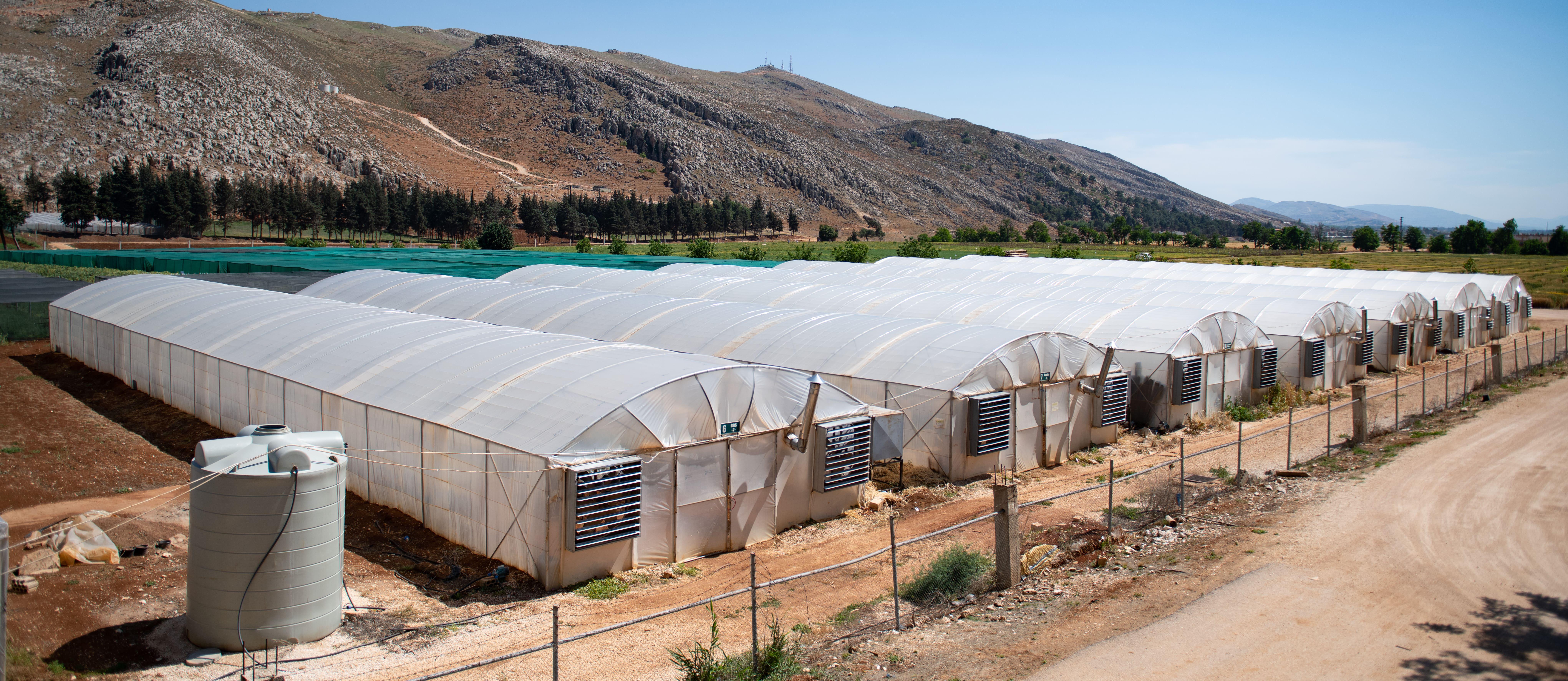Plastic houses, ICARDA Terbol Station in Lebanon.