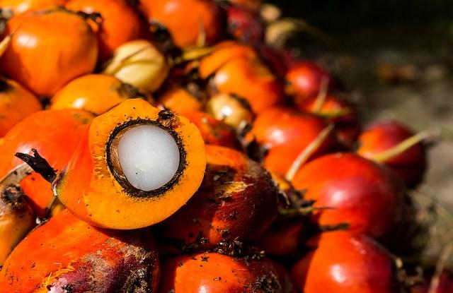 oil palm, palm oil, oil palm fruit