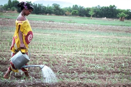 Women and Irrigation