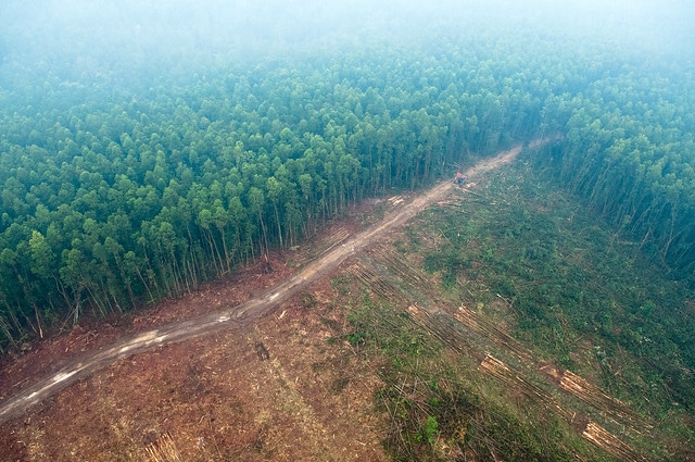 deforestation, payment plan