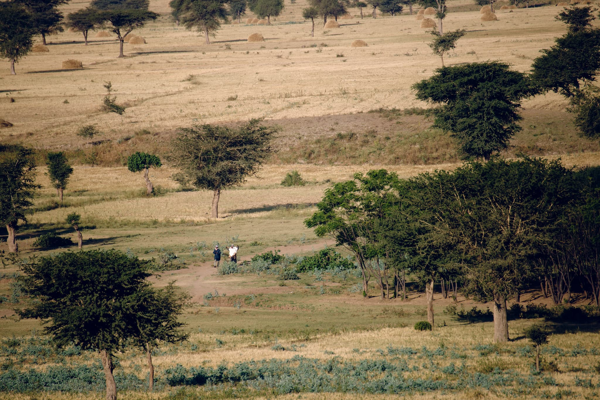 ethiopia, drylands, dry forests, deforestation