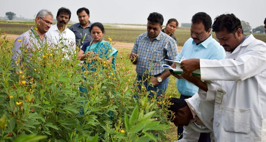 Dr Shivali Sharma showing pigeonpea pre-breeding material to researchers from India, Kenya and Myanmar. Photo: ICRISAT