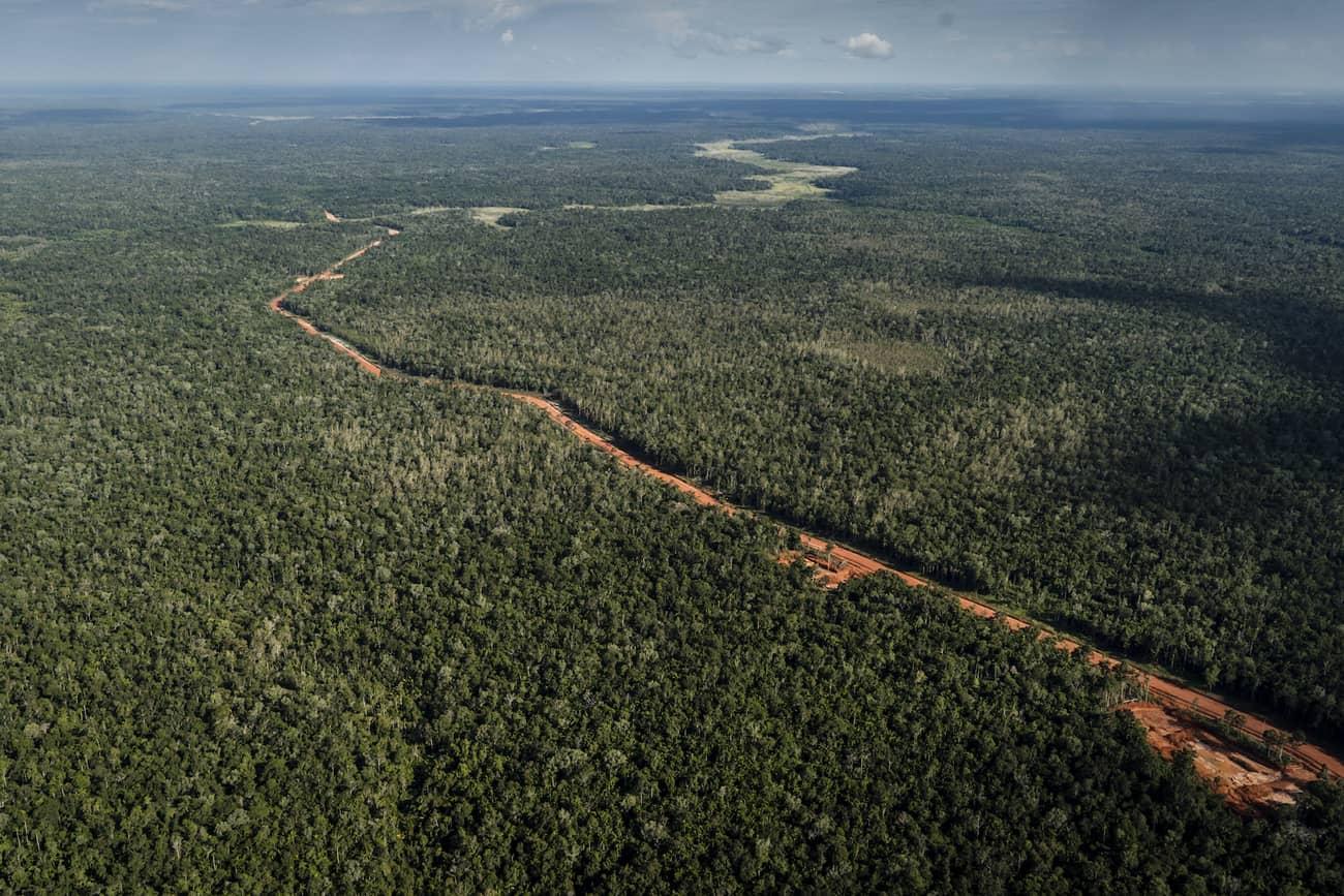papua, trans-papua highway, papua oil, papua timber, papua logging, papua palm oil