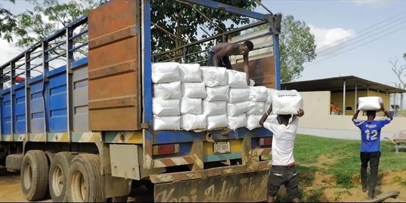 Decade-long trials prove efficacy of Nigeria's aflatoxin biocontrol product