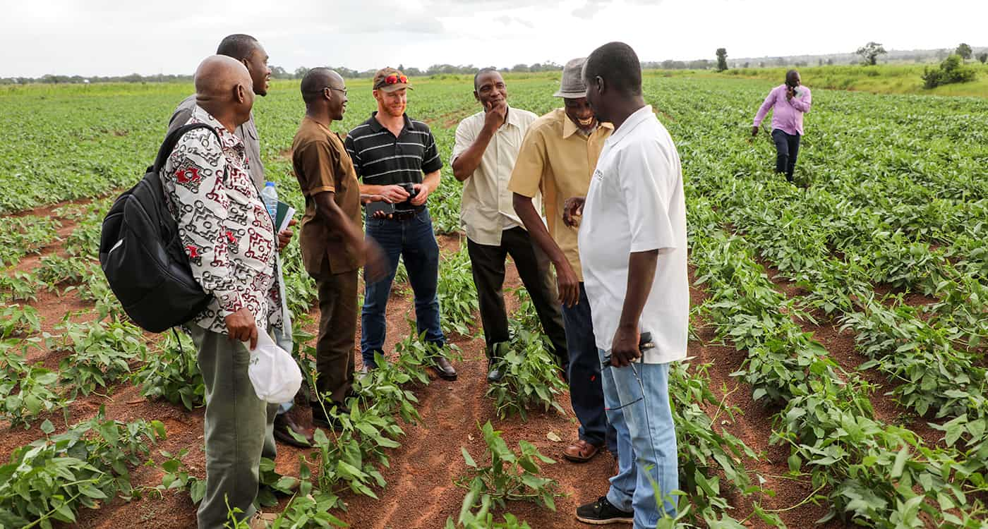 Members of the AVISA and Bayers project team walking through a cowpea breeder seed field in Nyankpala, Ghana, West Africa. Photo: M Magassa, ICRISAT
