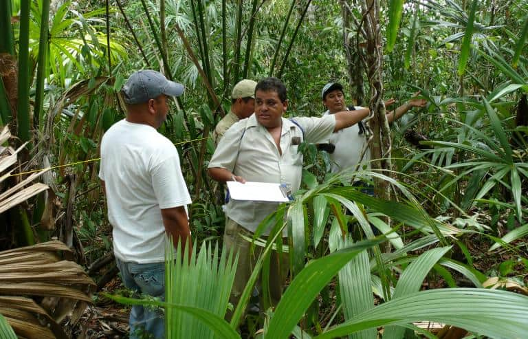 Forest inventory in Petén, Guatemala. Photo Aldo Rodas, Ministry of Agriculture and Livestock-0