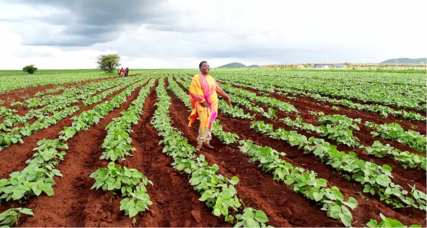 Farmer Betty Bondo in her field. Photo: ICRISAT