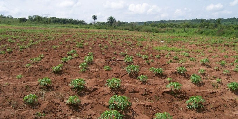Continuing to strengthen food systems in Africa