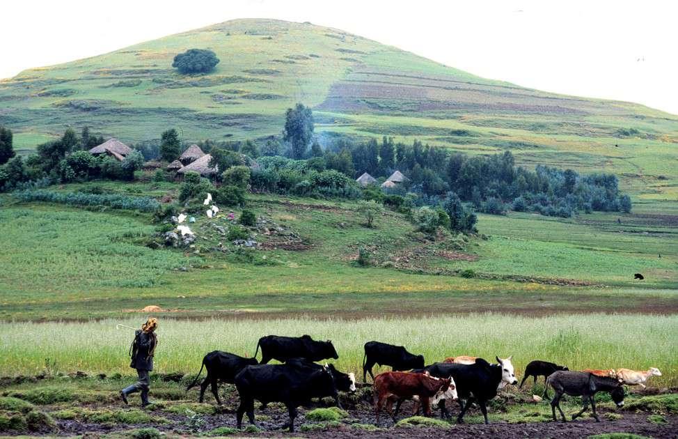 Farming scene in the highlands of Ethiopia (ILRI/Apollo Habtamu).