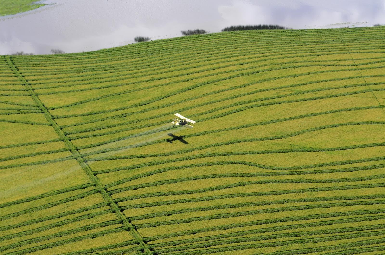 Wheat Uruguay. CIAT/N. Palmer