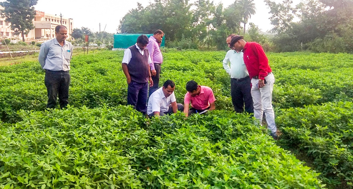 Dr Shrikant L Sawargonkar, IGKV, observing state multilocation trials in Raipur (2019).