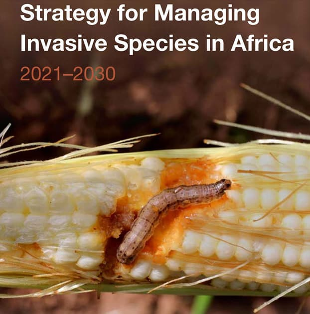 IITA releases 10-year strategy for managing invasive species in Africa