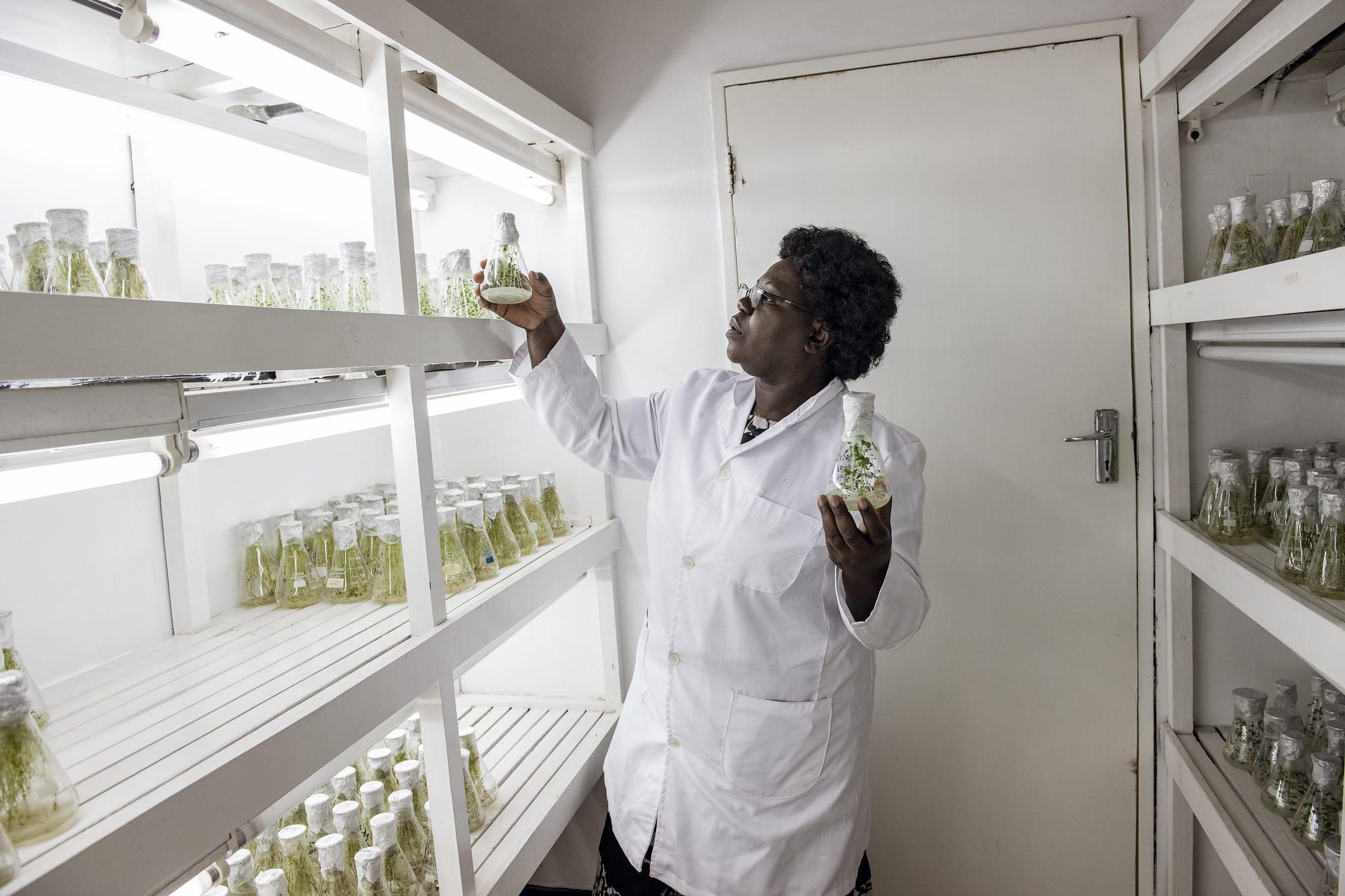 Header image of CIP scientist