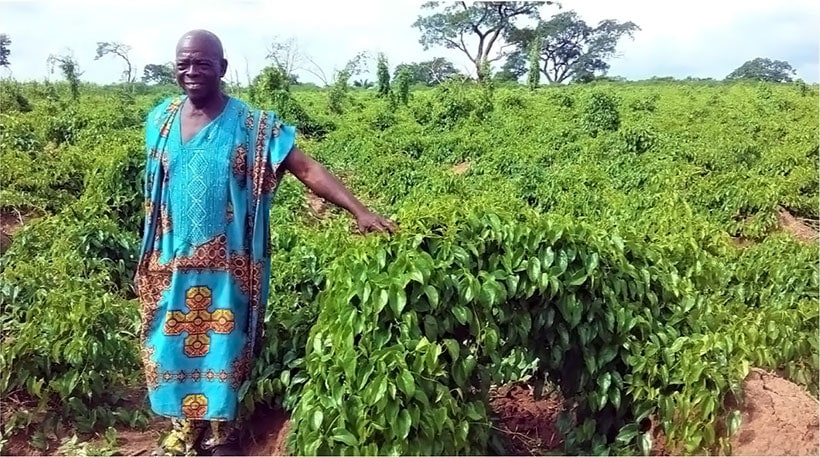 Chief Joshua Ojedele in his Agunrege farm