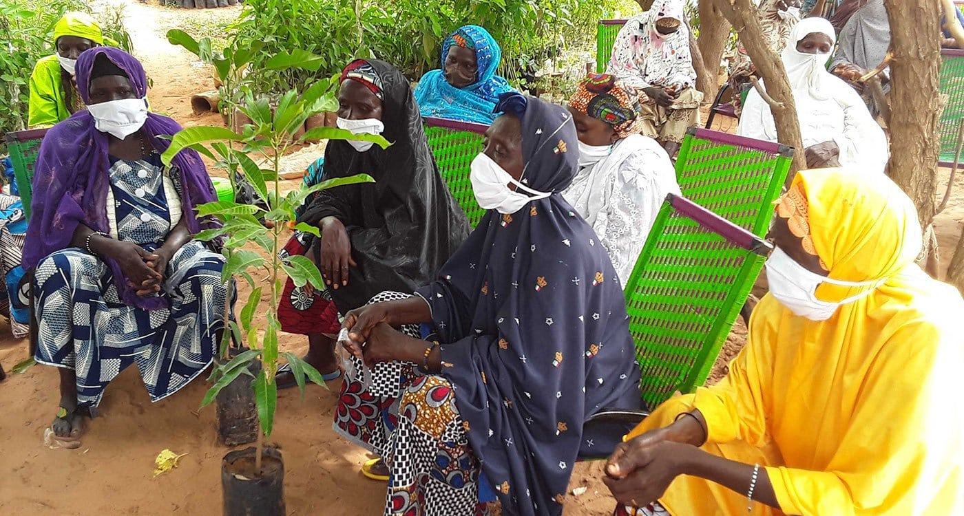 Women farmers during a grafting demonstration in Niger. Photo: B Traore, ICRISAT
