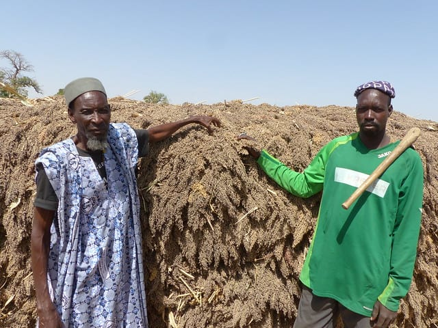 AVISA: Farmers from Mali next to their sorghum harvest.