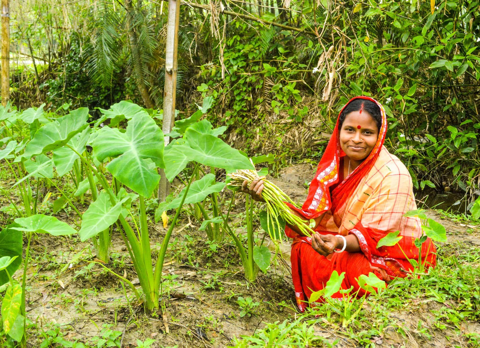 Harvesting veg in Bangladesh - WorldFish - M.Rahman