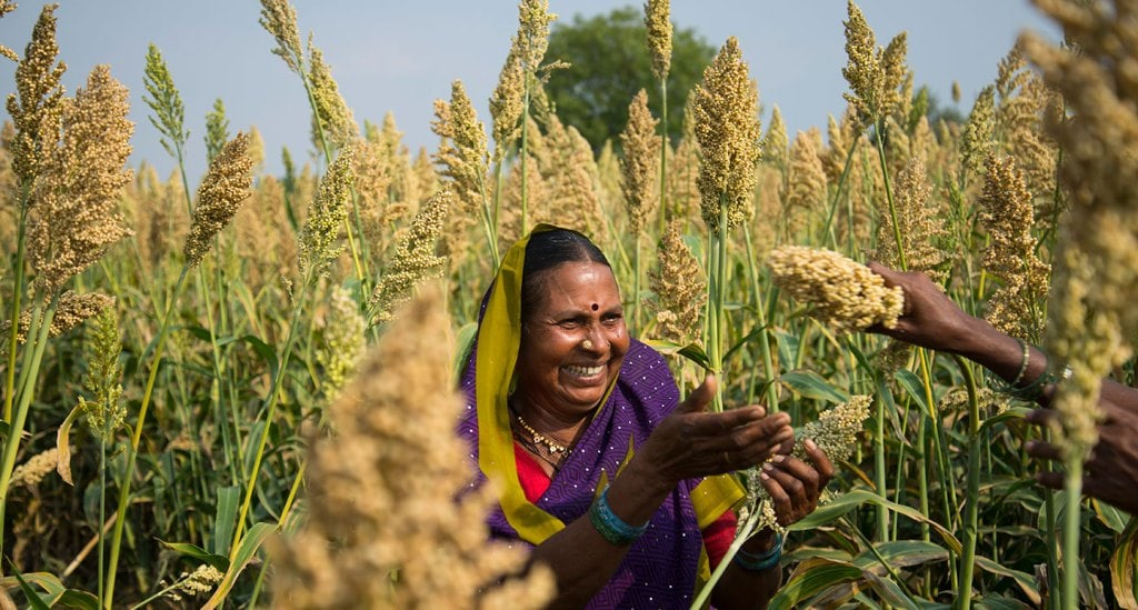 Sorghum in a farmer's field in India. Photo: Punna S, ICRISAT