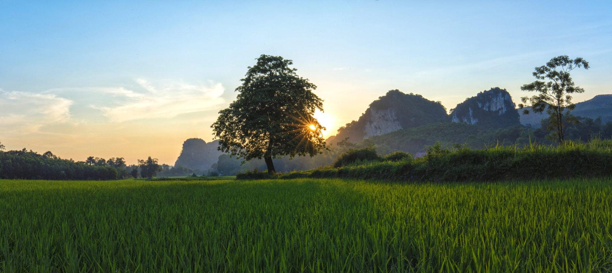 Landscape in Hoa Binh province, northwest of Vietnam (photo credit: ILRI/Vu Ngoc Dung)