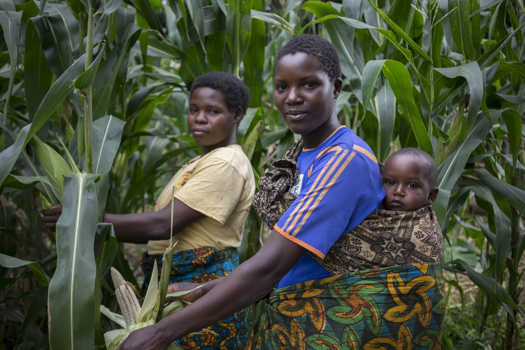 Climate-smart maize