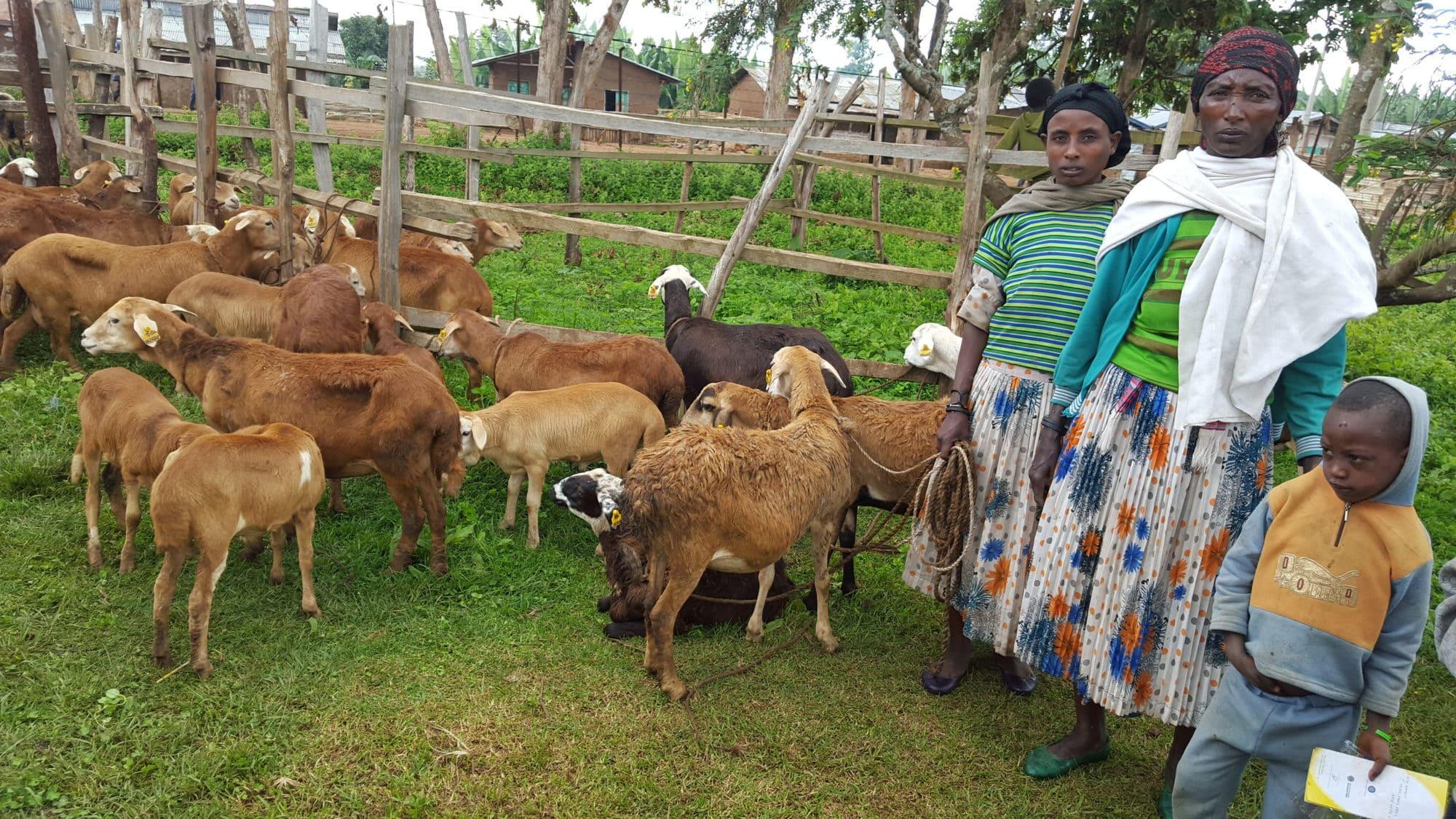 Community-based sheep and goat breeding