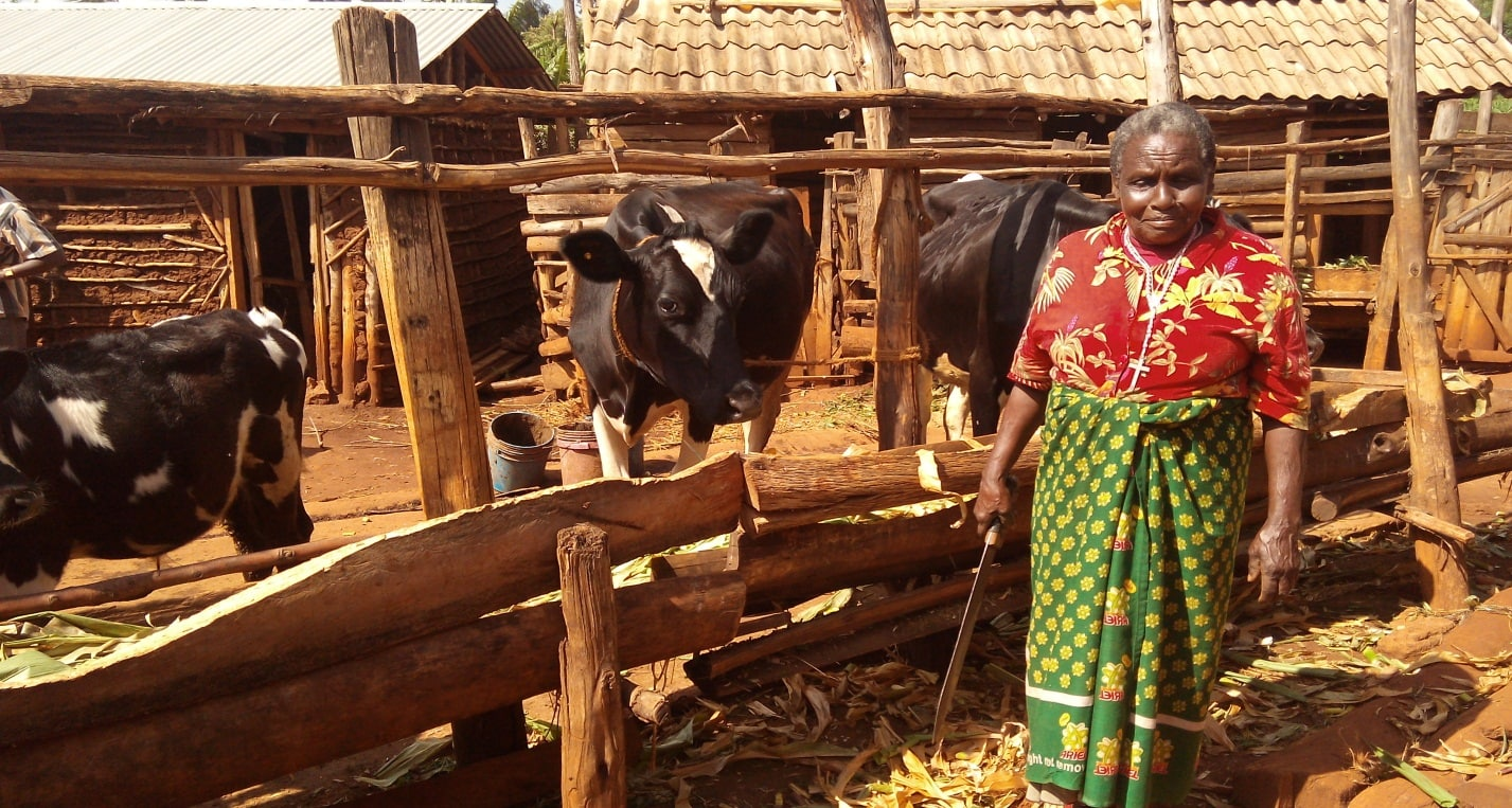 Pro-poor dairy policy in East Africa and India