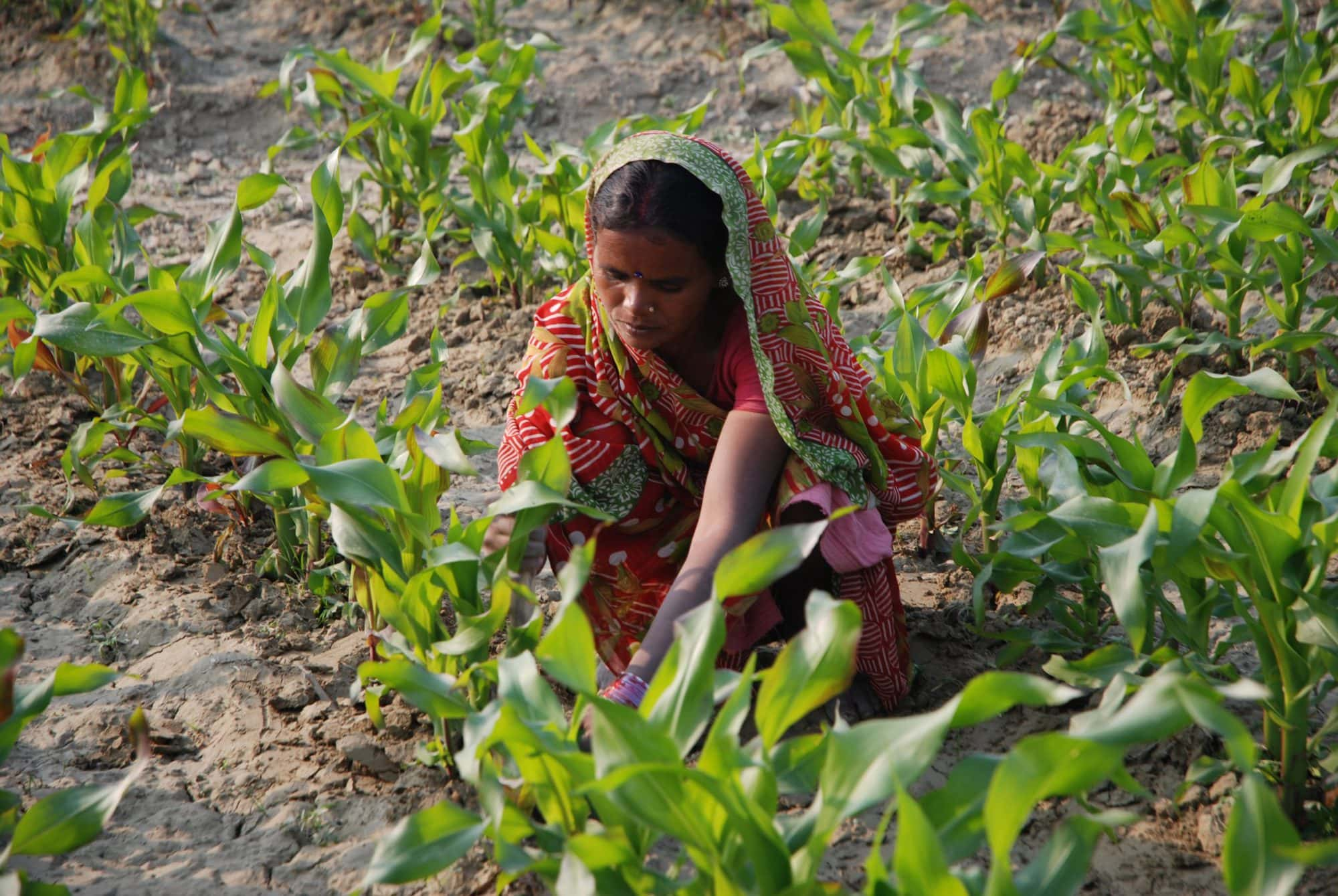 Zero tillage to reduce air pollution in India