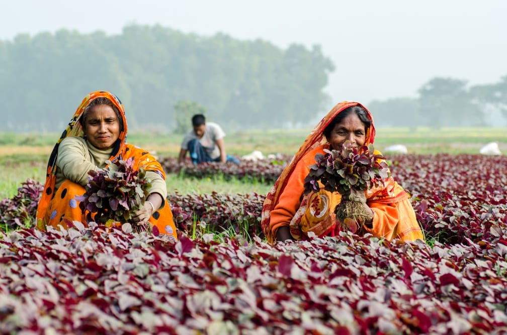 An index for measuring women's empowerment in agriculture