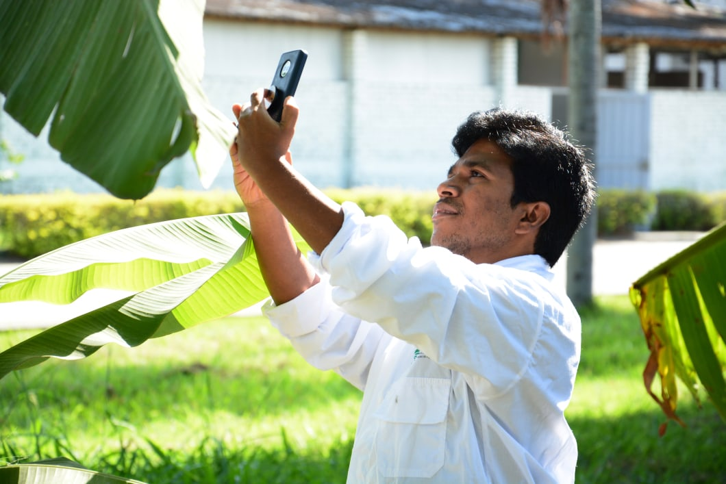 Tumaini: an AI-powered mobile app for pests and diseases