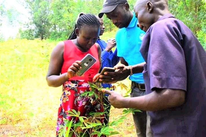 Mercy Tsuma and John Mayieka, Field Officers training farmers on how to use NuruAI in diagnosing diseases in Kenya (Credit: James Mugo)