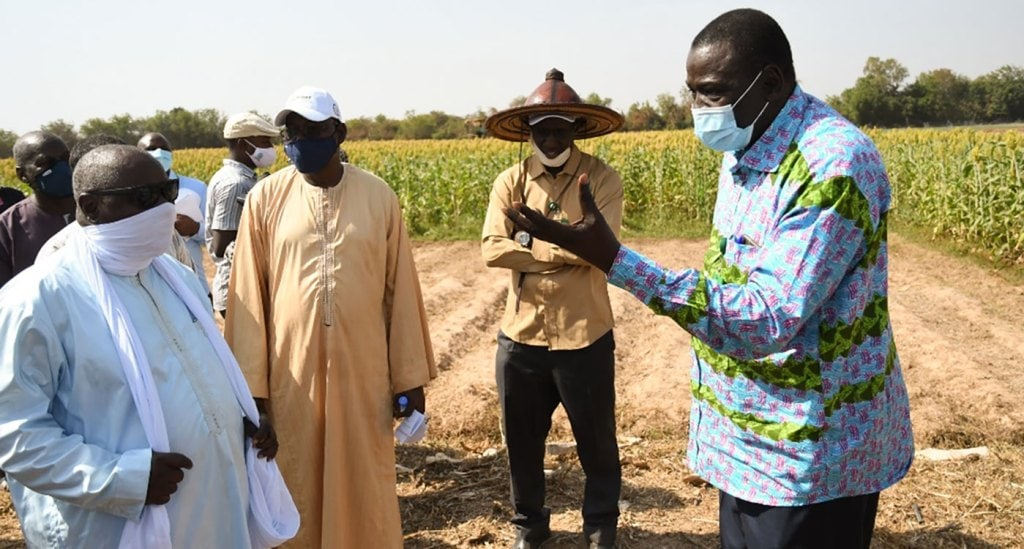 Mr Mohamed Ould Mahmoud (far left), Minister of Agriculture, Livestock and Fisheries with Dr Ramadjita Tabo (far right) during the visit to sorghum experiment plots. Photo: N Diakité, ICRISAT
