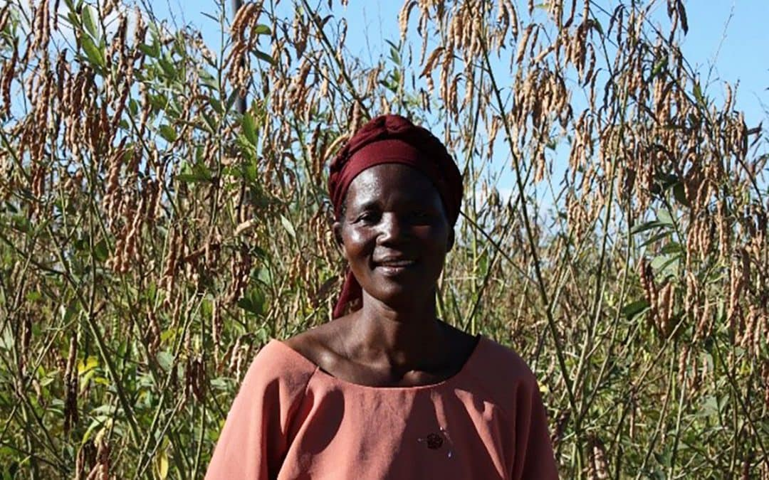 Climate-smart pigeonpea sparks phenomenal expansion across Malawi