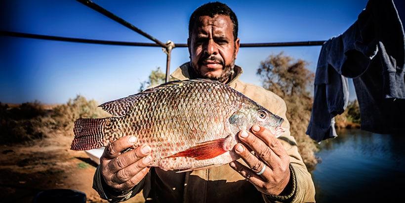 Nile Tilapia caught in Lake Nasser, Aswan, Egypt