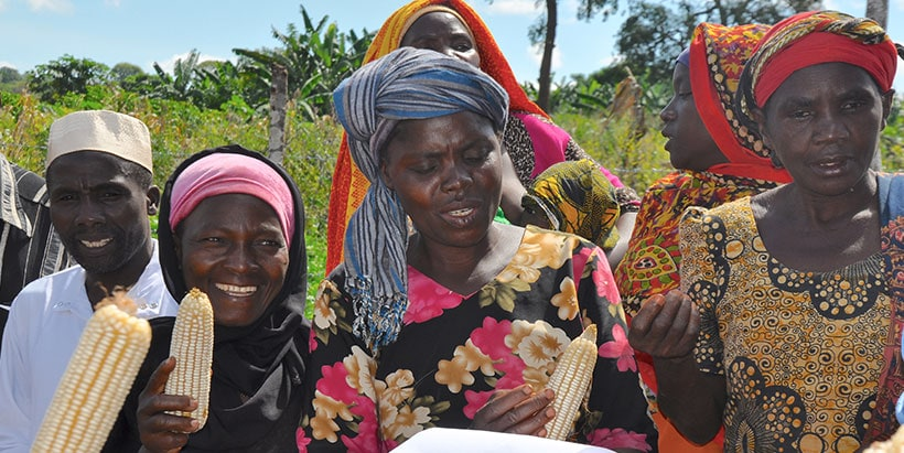 Excited farmers with improved maize varieties.