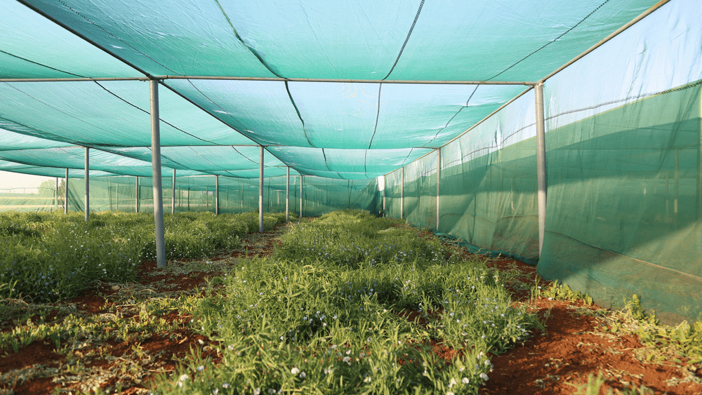 Greenhouse desert agriculture IDFS
