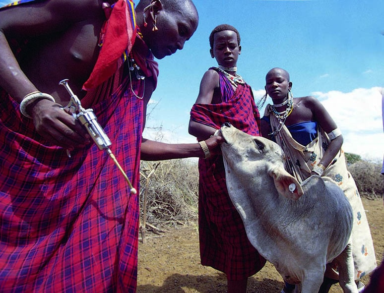 A vaccine against the lethal cattle disease East Coast fever