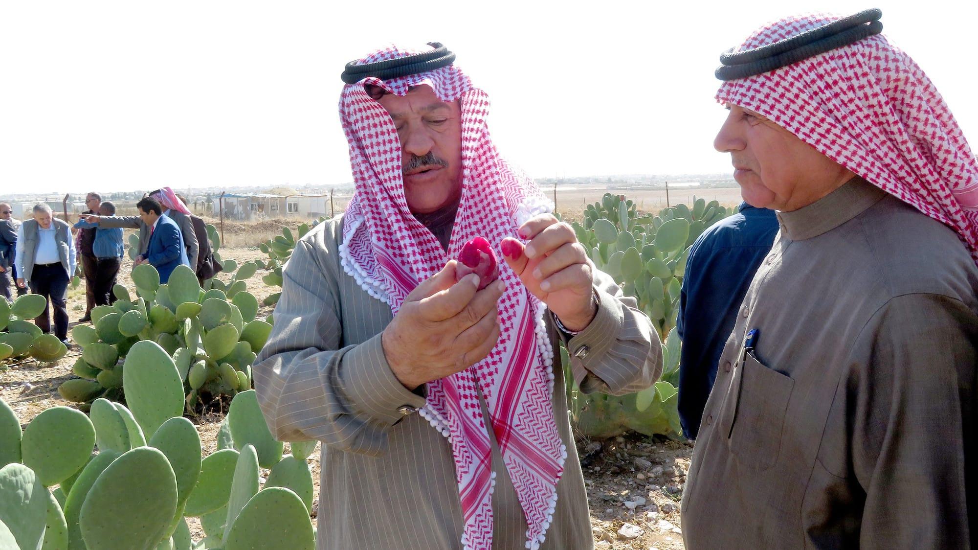 Cactus pear: nature's 'green gold' for better farmer livelihoods