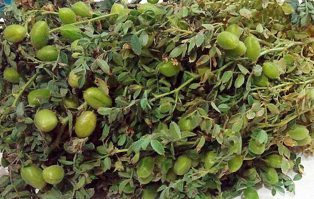 How small-scale farmers jumped commercialisation hurdles in Ethiopia (ICRAF)