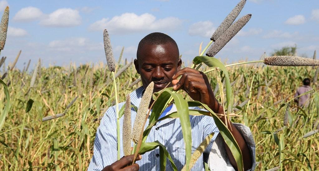Work on a 'forgotten foods' manifesto begins in Africa