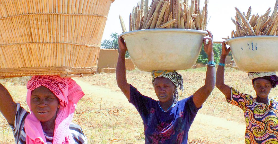 Millets prove tasty solution to climate and food security challenges (ICRISAT)