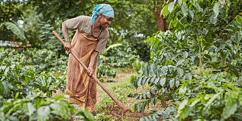 WORKING TOWARDS A DECENT STANDARD OF LIVING FOR SMALLHOLDER COFFEE FARMERS IN THE MOUNT ELGON REGION