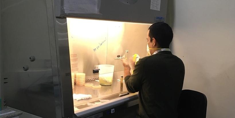 IITA Plant Pathologist Dr Alejandro Ortega-Beltran working on the inoculum to manufacture Aflasafe MZ02 in the Arusha factory.