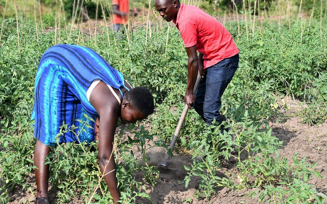 Food System Transformation Needs to Work for All: Why Youth in the Semi-Arid Drylands are Underserved in Agriculture