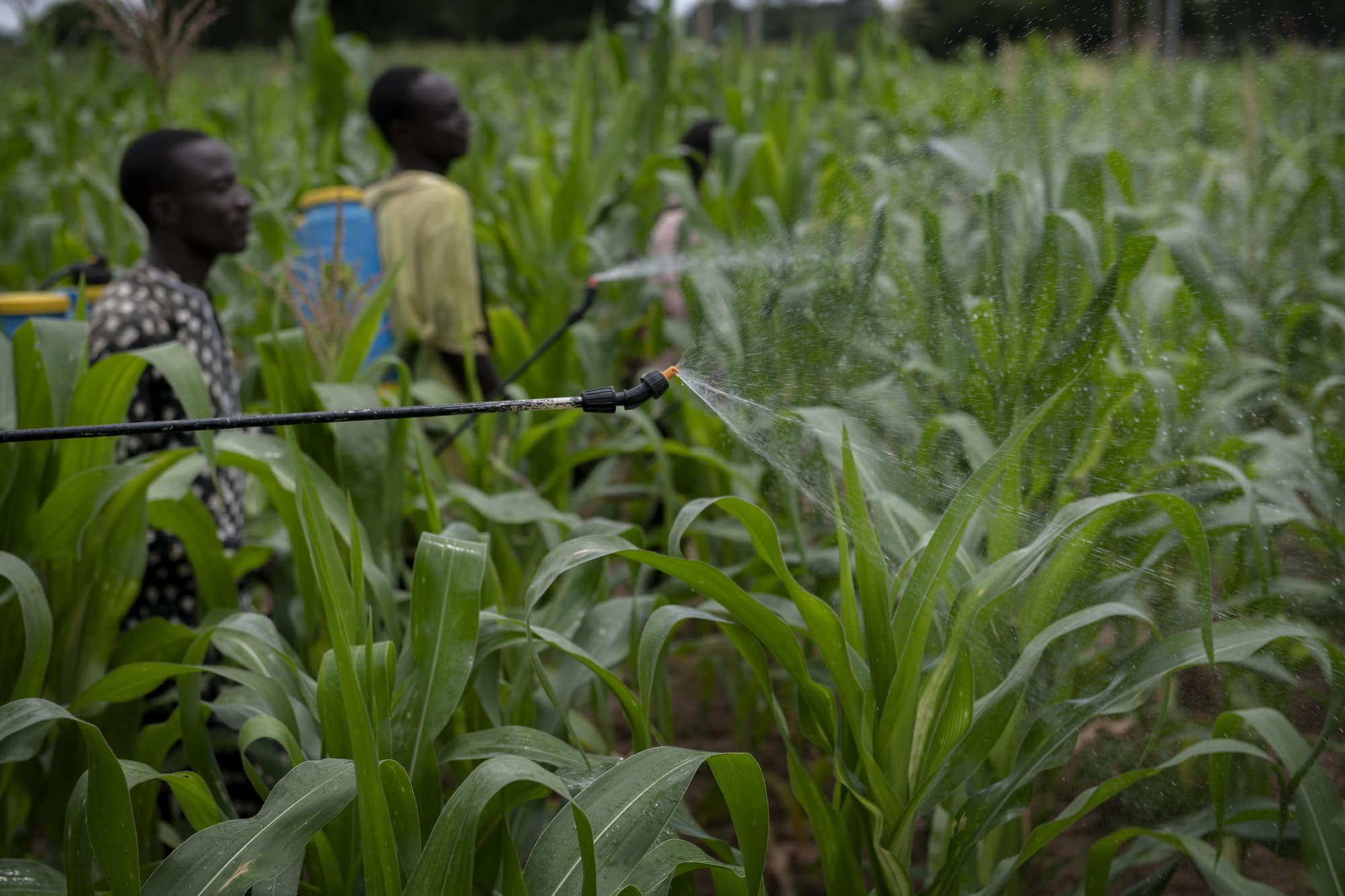 Plant Health and Rapid Response to Protect Food Security and Livelihoods