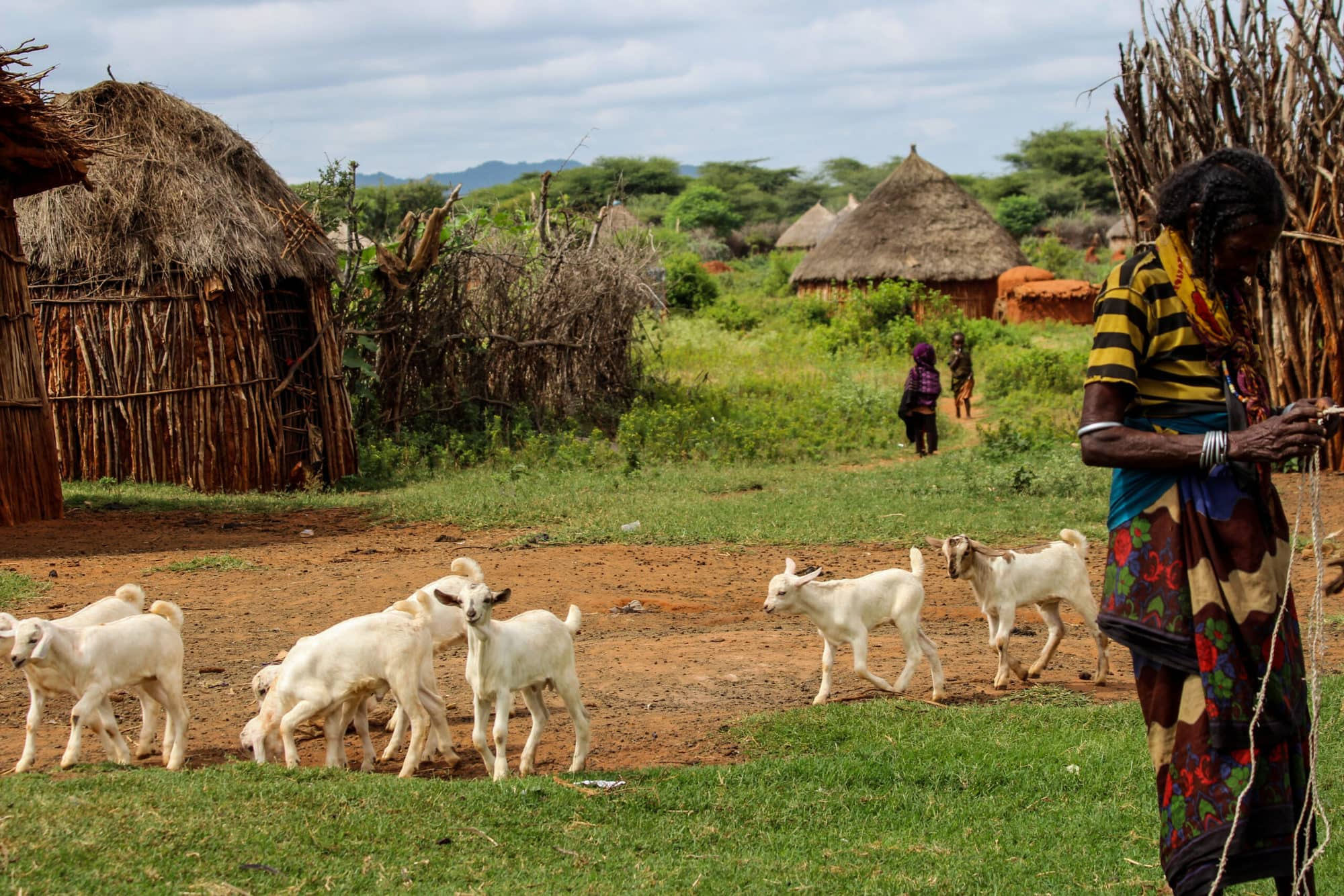 A Borana woman with her small ruminants, Yabello, Ethiopia (photo credit: ILRI/Camille Hanotte)