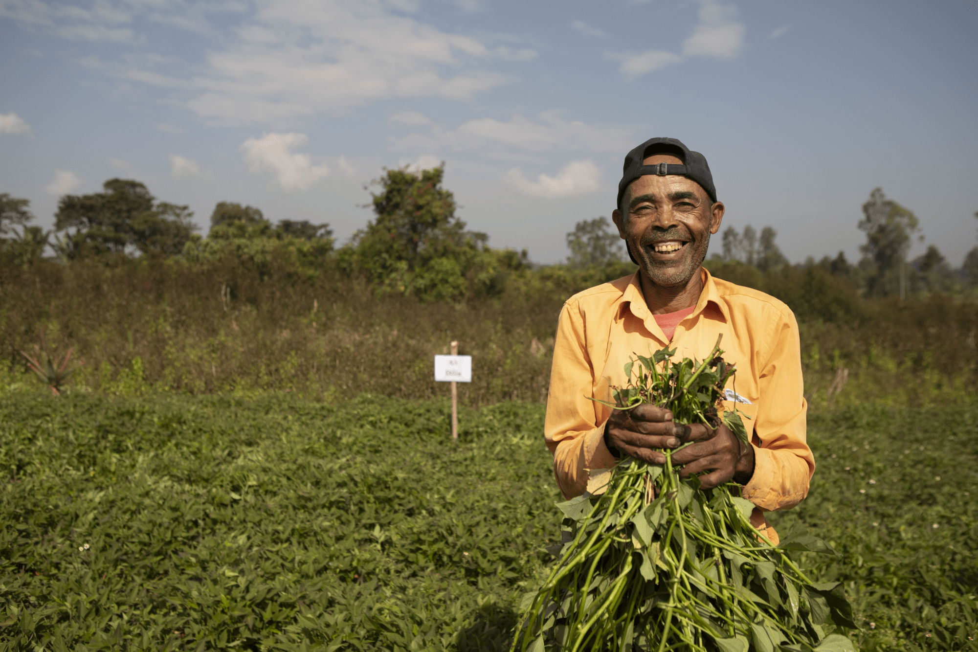 Sustainable Intensification of Mixed Farming Systems