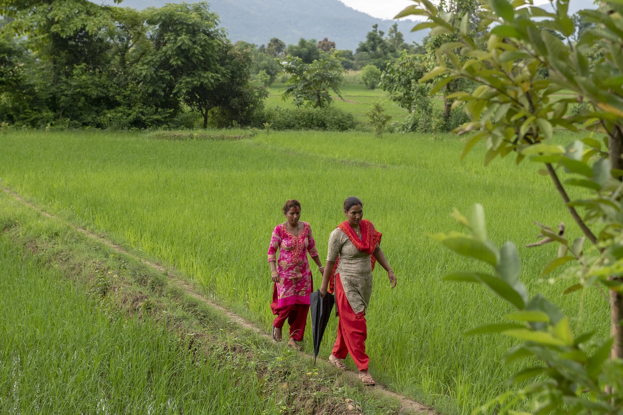 Transformational Agroecology Across Food, Land, and Water Systems