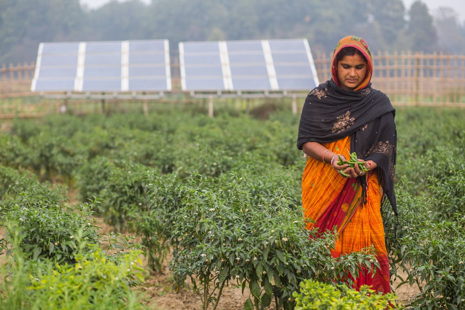 20 Transforming Agrifood Systems in South Asia (TAFSSA)